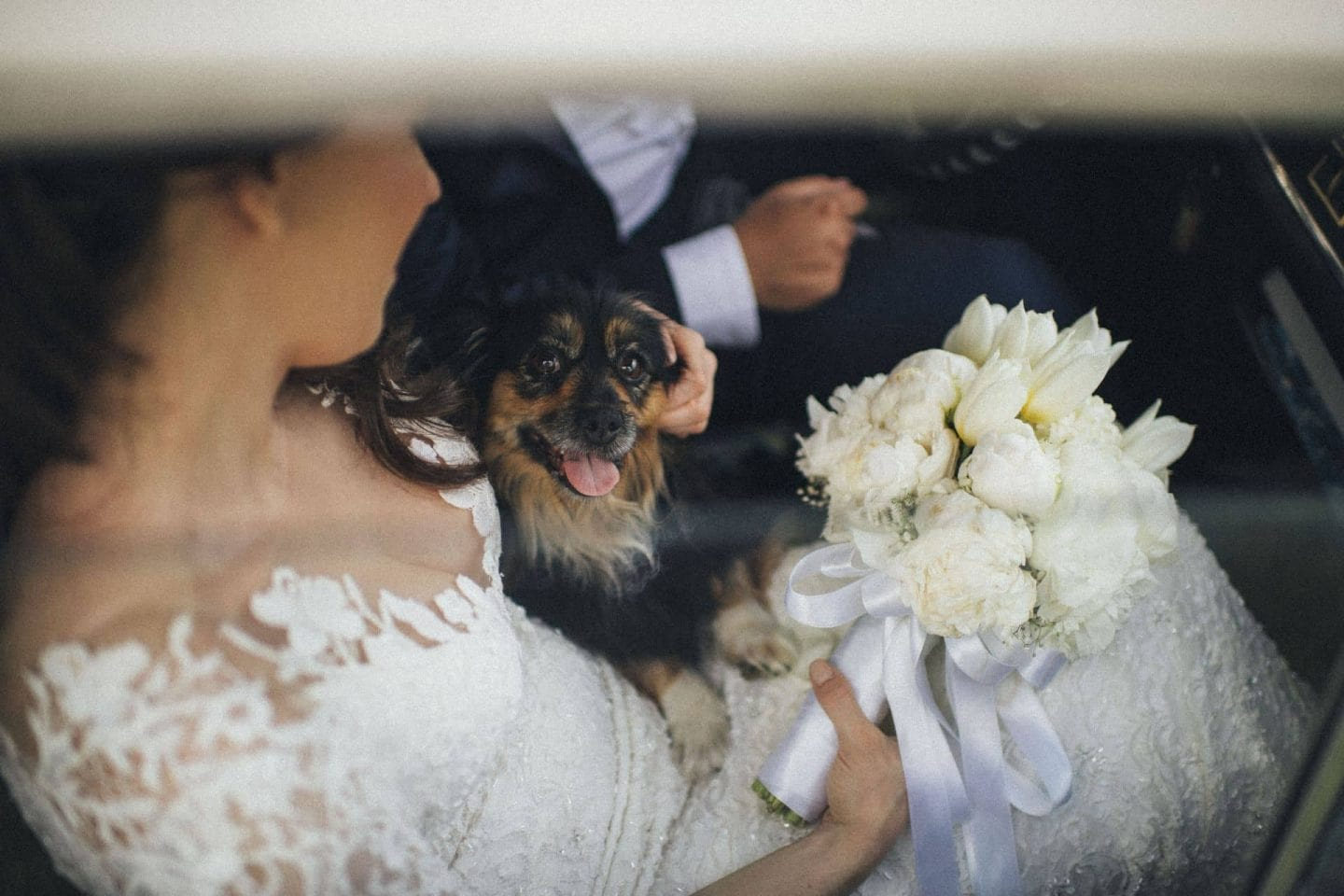 dalmatian wedding: split in love